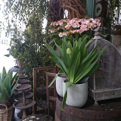 Ladengeschäft Blumen
